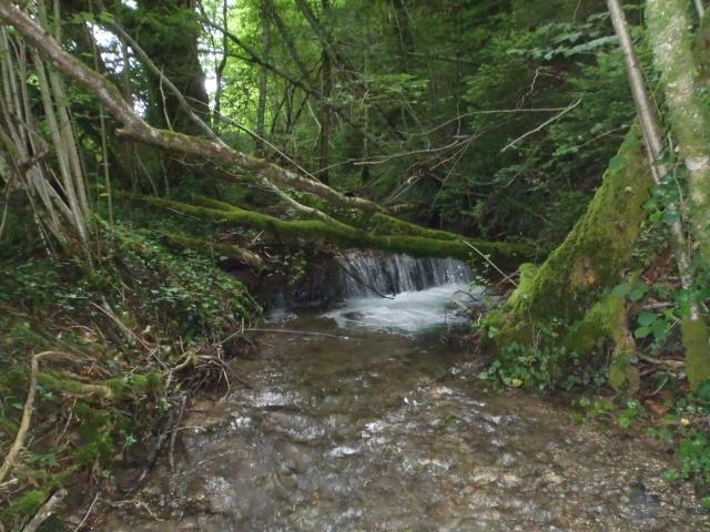 ruisseau - ruisseau en Juin toujours de l'eau P6190014