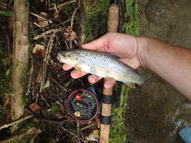 ruisseau - ruisseau en Juin toujours de l'eau P6190034