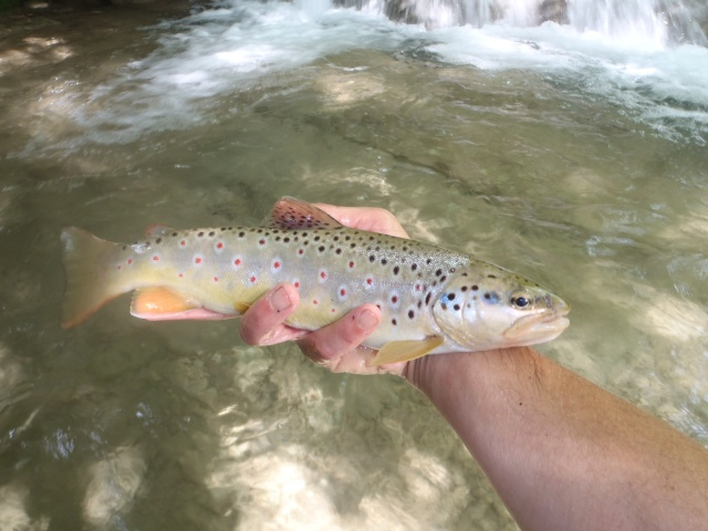 ruisseau - ruisseau en Juin toujours de l'eau P6190037