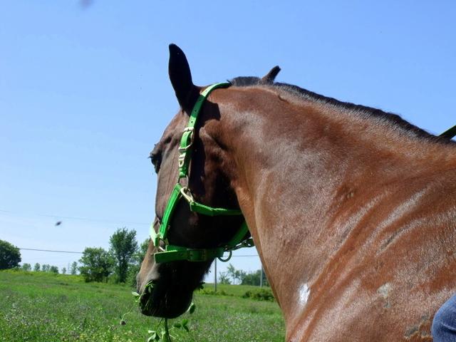 ♣ photos de vous à cheval - Page 4 Dscf4012