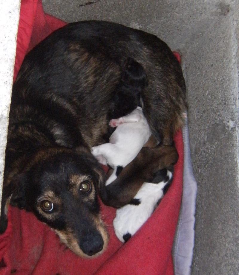 MIMI et SES PETITS tous adoptés en juin 2008 Mimi10