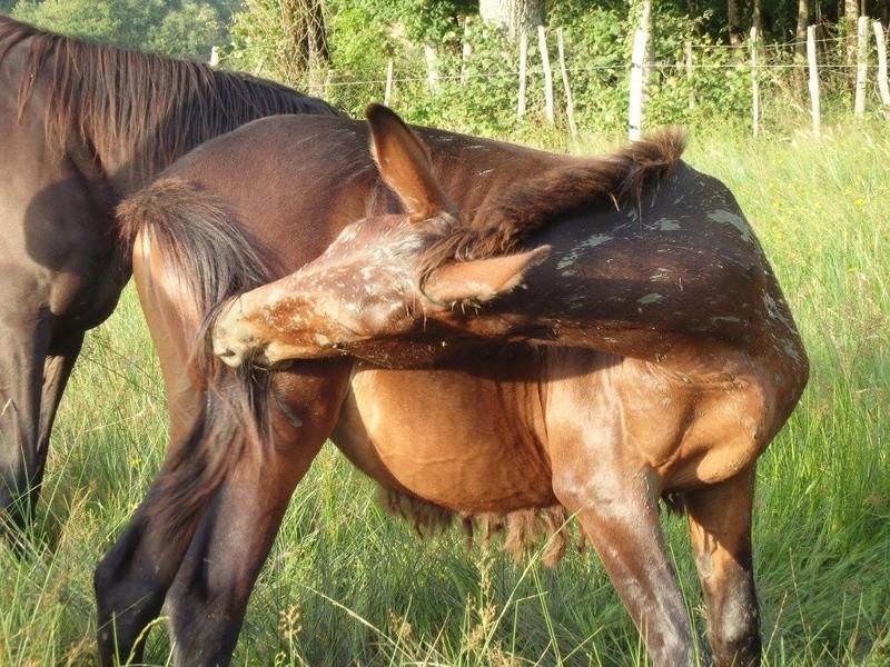FALBALA - ONC mule née en 2015 - adoptée en juillet 2016 par Thierry - Page 2 13641210