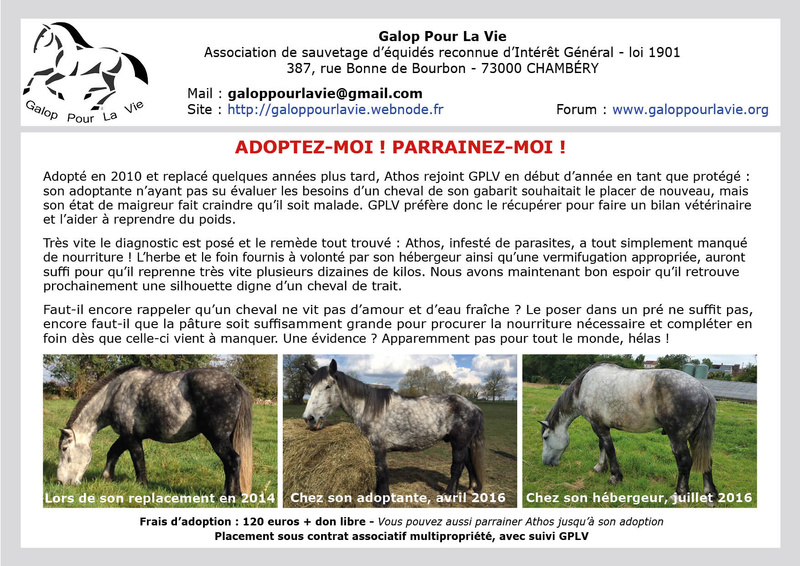 (60) ATHOS - Hongre Trait Percheron né en 2010 -  A ADOPTER (306 € + don libre) Athos410