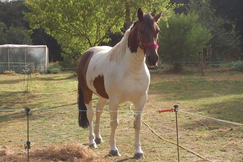 UKAN - OC Poney né en 2008 - adopté en juillet 2011 par Jean-Luc Dsc_0085