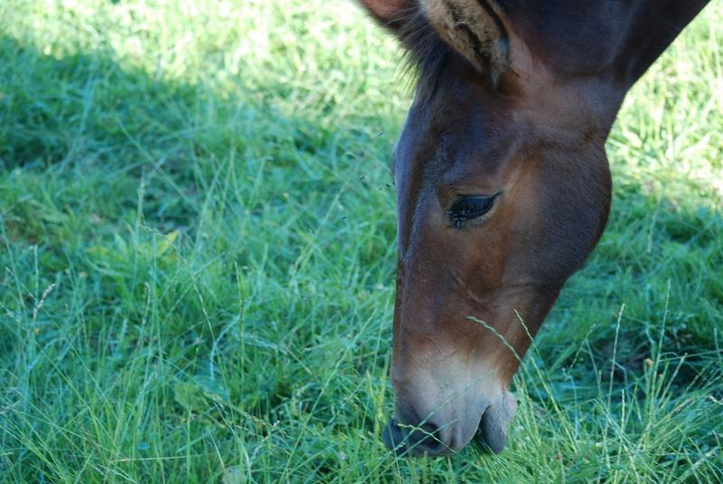 FALBALA - ONC mule née en 2015 - adoptée en juillet 2016 par Thierry - Page 2 Dsc_0215