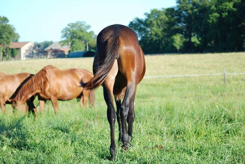 FALBALA - ONC mule née en 2015 - adoptée en juillet 2016 par Thierry - Page 2 Dsc_0216