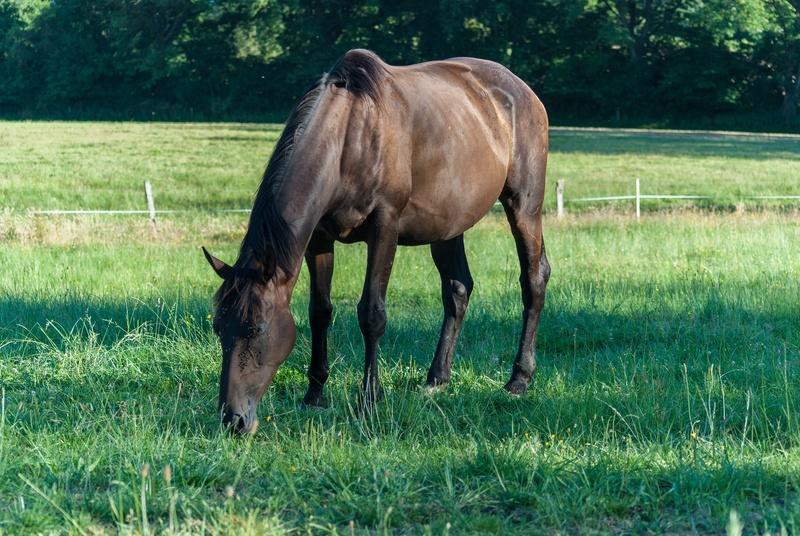 (87) CARMA - jument née en 2012 - issue de saisie - A PARRAINER Dsc_0232