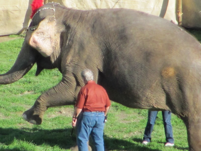 Water for Elephants : Photos  + Vidéos du tournage... - Page 11 Waterf10