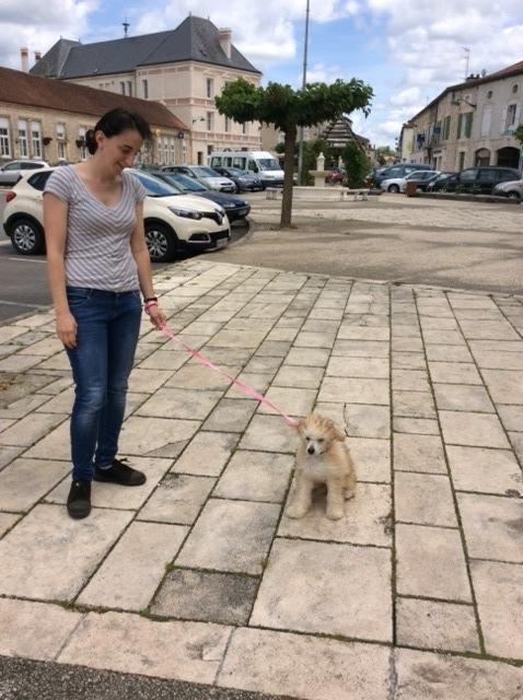 MANI petit chien chinois à houpette de 4 mois  Adopté Img_0029