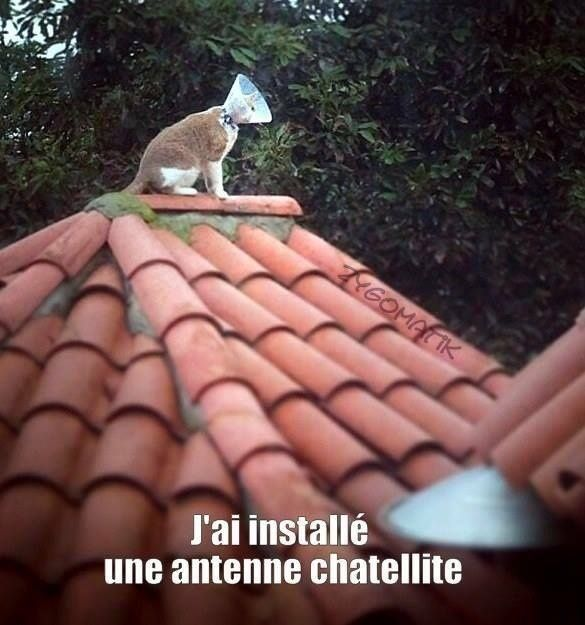 humour - Page 21 13511910