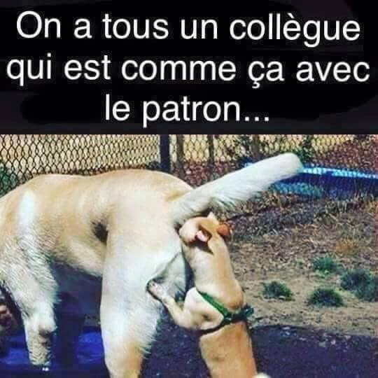 humour - Page 21 13521911