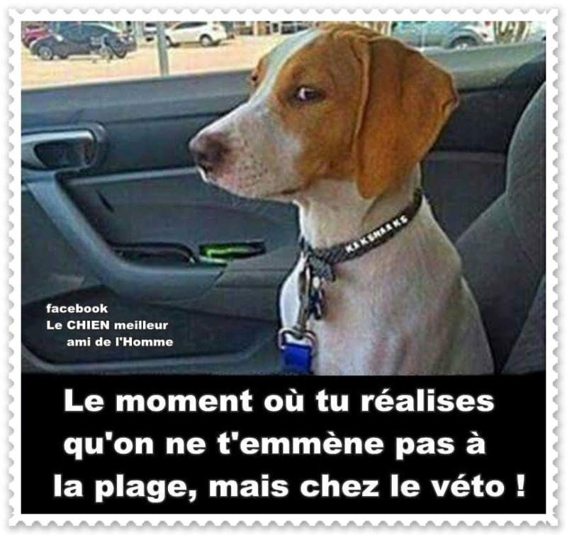 humour - Page 38 13566912