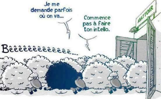 humour - Page 4 13566914