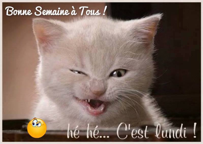 humour - Page 6 13615010