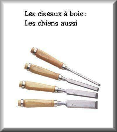 humour - Page 39 14079912