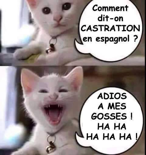 humour - Page 3 14191914
