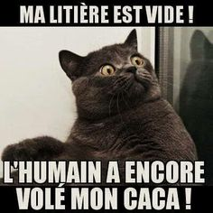 humour - Page 5 720cdc10