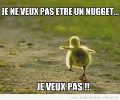 humour - Page 38 Fe3cc210