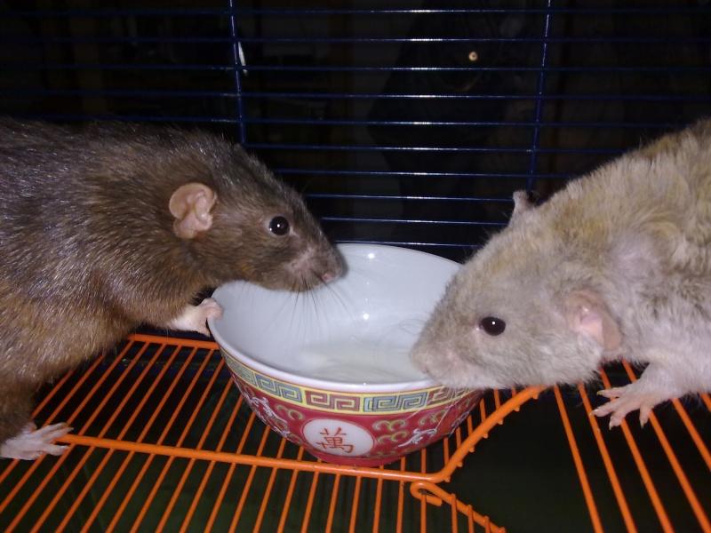 """""""Tetes de rats"""" 22082010"""