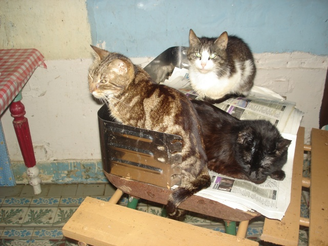 plus de 23 chats dans 2pièces sans électricité 59 03811