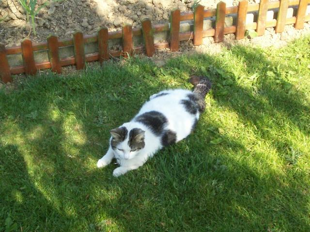 pour mes 3 chats perdus en 2 mois 62  st venant Vanill11