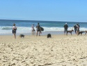 Le Forum du Rhodesian Ridgeback - Portail Ocean_10