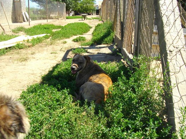 KYLE, M-X, né 2014, 15 kg (BELLA) - Pris en charge Les Amis des Bêtes du Soissonnais - Page 3 Imgp4221