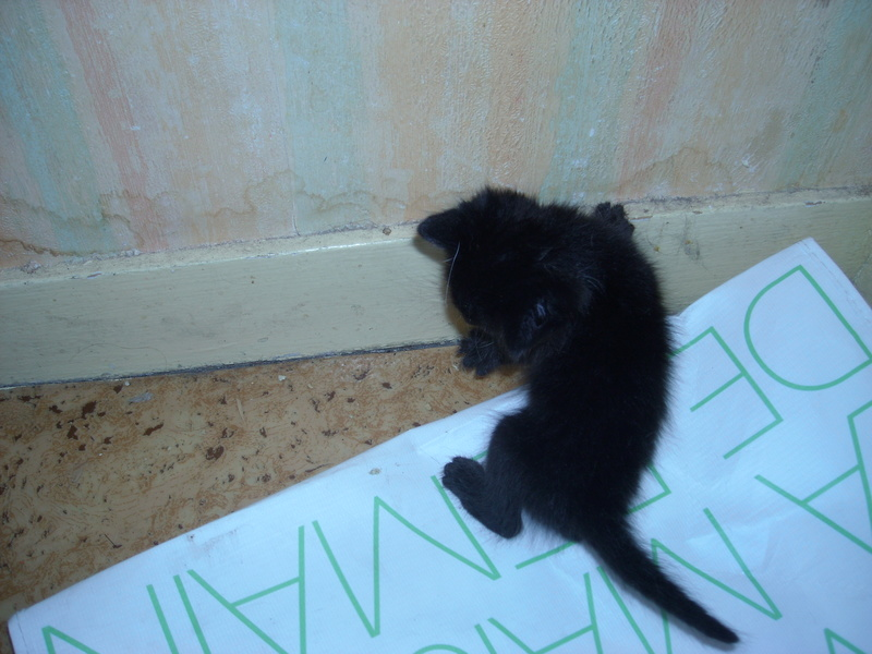 Donne chatons 2016-010