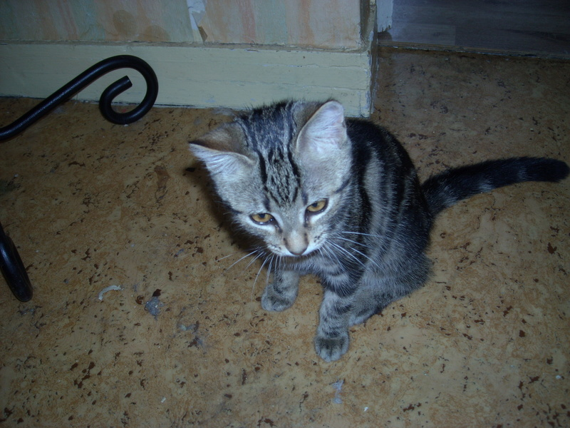 Donne chatons 2016-013