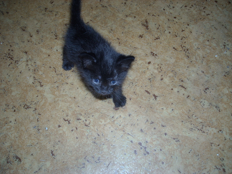 Donne chatons 2016-015