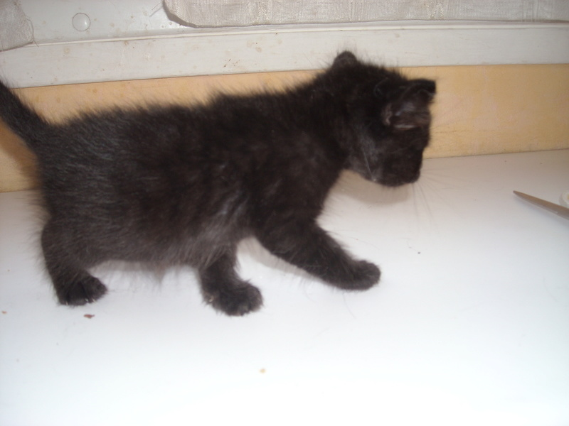 Donne chatons 2016-016