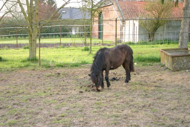 CACAHUETE - OI poney présumée née en 1980 - adoptée en avril 2009 Cacaho10