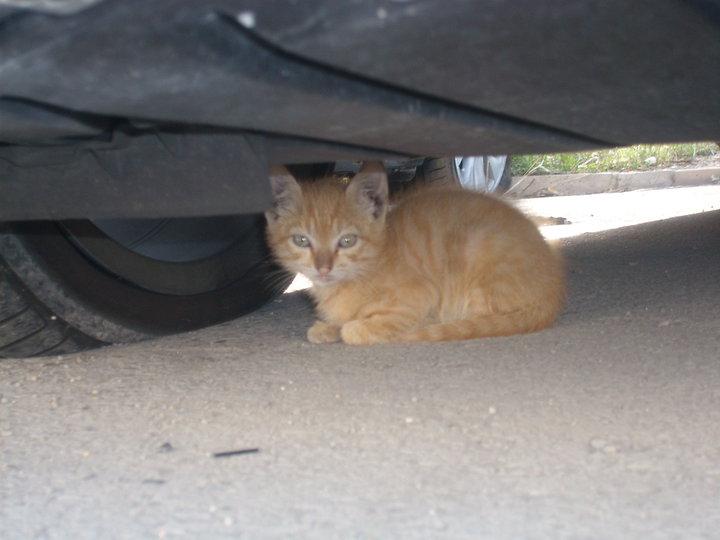4 gatitos bebés viviendo entre coches. Madrid No tienen mamá Gatito10
