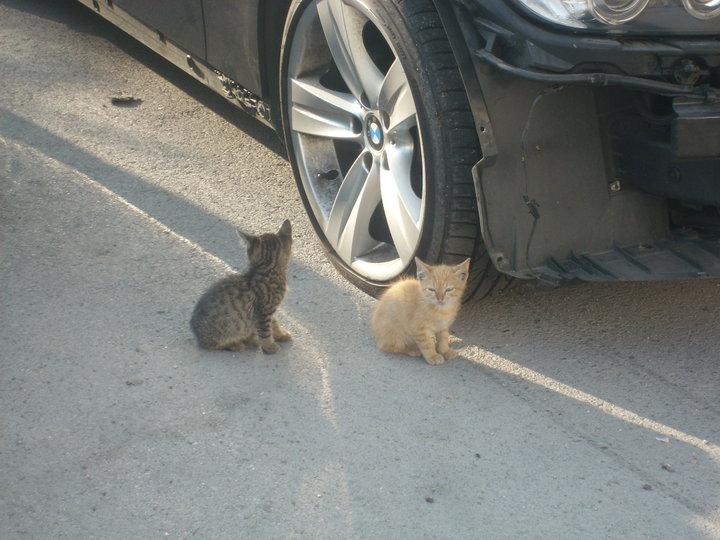 4 gatitos bebés viviendo entre coches. Madrid No tienen mamá Gatito11