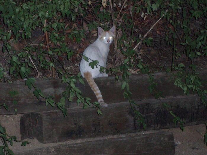 Odin, Nanuk y Odel. 3 gatitos cachorros viviendo en zona peligrosa Madrid Nanuk10