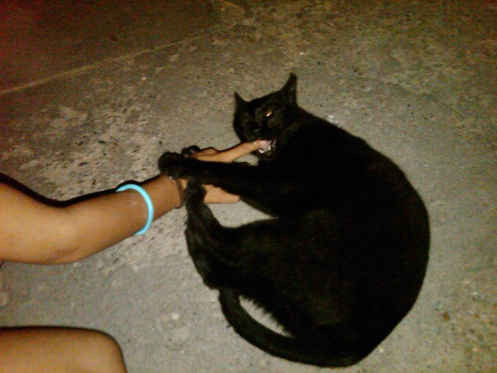 Bob, gato adorable en la calle. Barcelona Negri10
