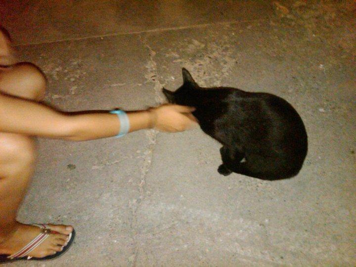 Bob, gato adorable en la calle. Barcelona Negri110