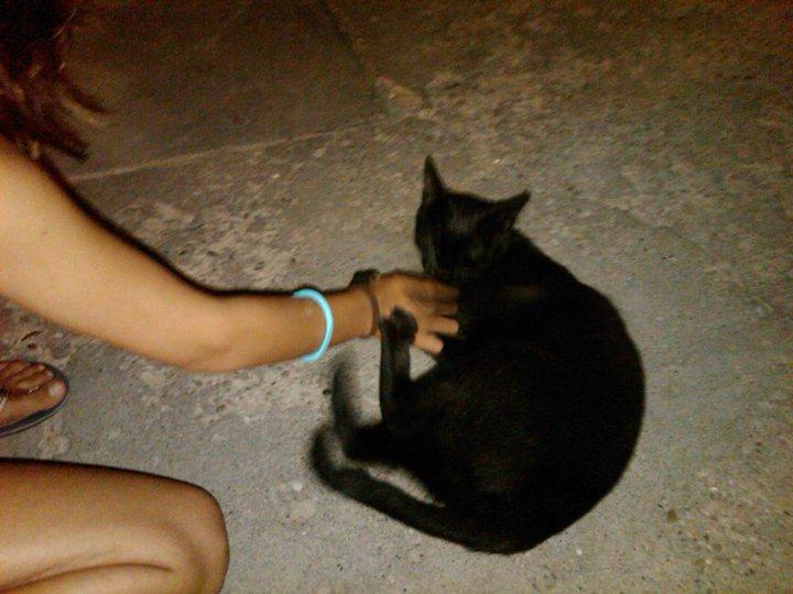 Bob, gato adorable en la calle. Barcelona Negri210
