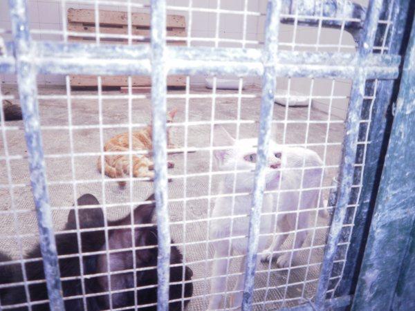 Andy y Lucas, dos gatos preciosos en perrera. Almería SOS P7150911