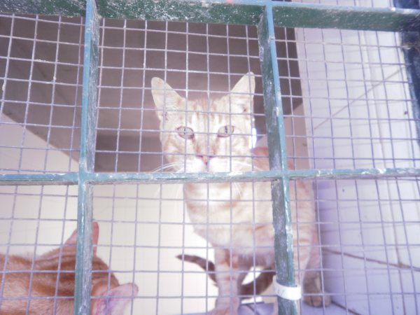 Andy y Lucas, dos gatos preciosos en perrera. Almería SOS P7150914