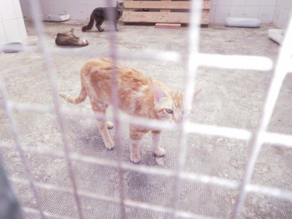 Andy y Lucas, dos gatos preciosos en perrera. Almería SOS P7150915