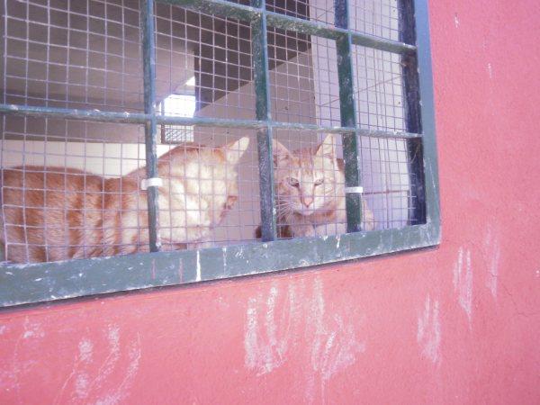 Andy y Lucas, dos gatos preciosos en perrera. Almería SOS P7150916