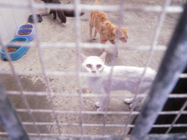 Andy y Lucas, dos gatos preciosos en perrera. Almería SOS P7150917