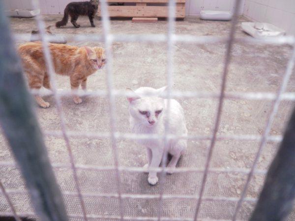 Andy y Lucas, dos gatos preciosos en perrera. Almería SOS P7150918