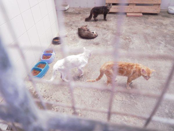Andy y Lucas, dos gatos preciosos en perrera. Almería SOS P7150919