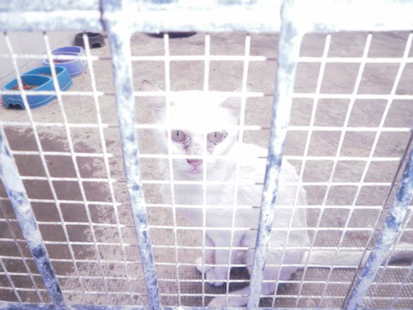 Andy y Lucas, dos gatos preciosos en perrera. Almería SOS P7150920