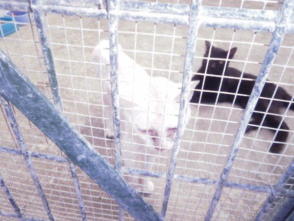 Andy y Lucas, dos gatos preciosos en perrera. Almería SOS P7150921