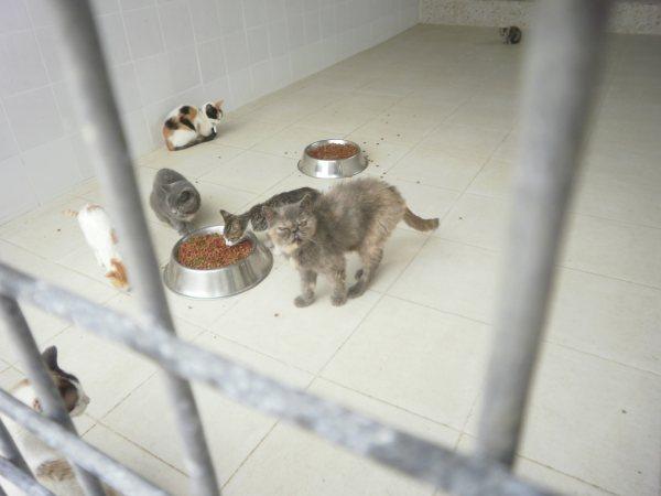 Acogida para gata persa y su  cachoro. Están en perrera Almeria P8180310
