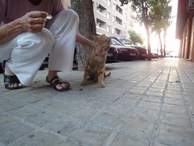Tritón, gatito pelirojo. Lo han echado a la calle.Valencia Triton14
