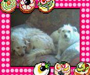 mes trois chiens Sp_a0811